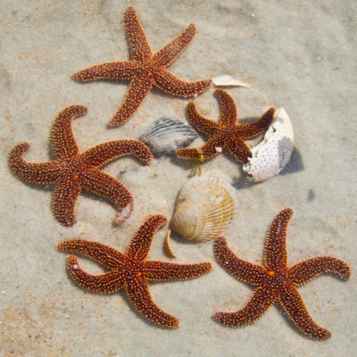 starfish_mg_9135